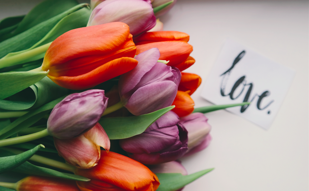 El Boletín de la Muerte y del Amor